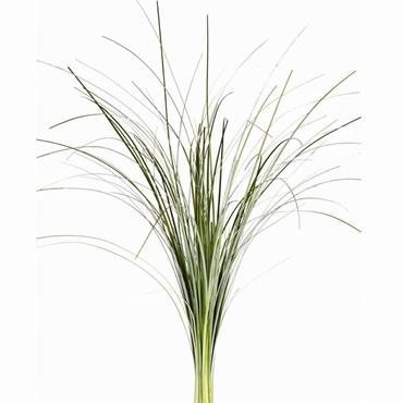 Bos Beargrass groen