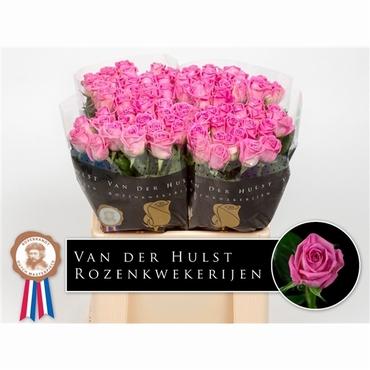Bouquet short pink Roses big heads