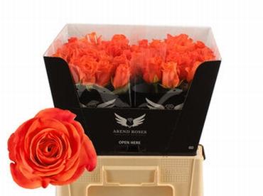 Bouquet orange Roses big heads