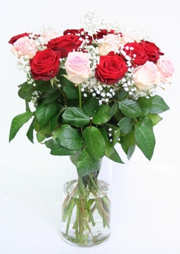 Bouquet of pink and red Roses big heads with Gypsophile
