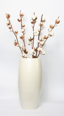 5 Cotton branches in a white vase