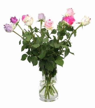Bouquet of 10 long waxed Roses with big heads Sweetheart mix