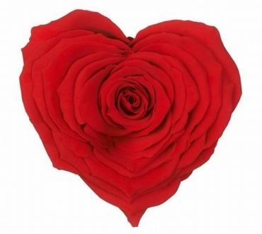Geconserveerd rode Rozen hart in een cadeaubox