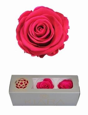 Geconserveerde Hot Pink Rozen in een cadeaubox