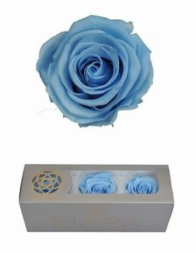 Geconserveerde Baby Blue Rozen in een cadeaubox
