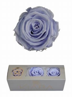 Geconserveerde Lavender Rozen in een cadeaubox
