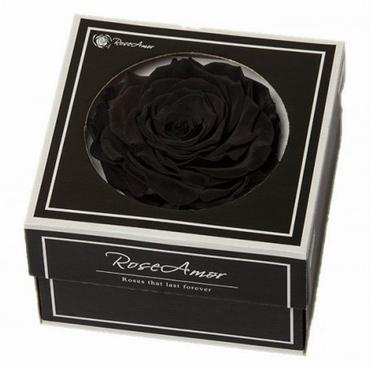 Geconserveerde zwarte Roos in een cadeaubox