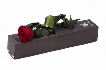 Geconserveerde rode Roos met steel in een cadeaubox