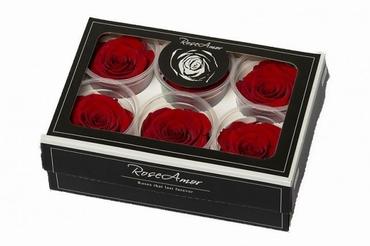 Geconserveerde rode Rozen in een cadeaubox