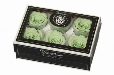 Geconserveerde mint groene Rozen in een cadeaubox