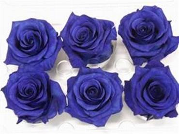 Geconserveerde blauwe Rozen in een cadeaubox