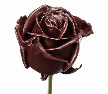 Roses à longue tiges à gros boutons ciré marron