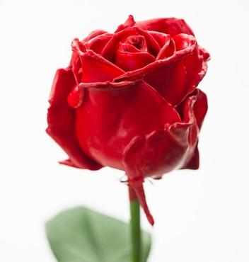 Boeket van grootbloemige rode wax Rozen