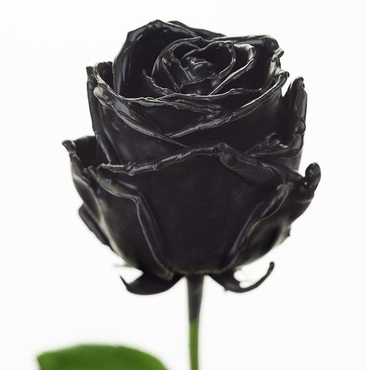 Bouquet of long black waxed Roses with big large flowers