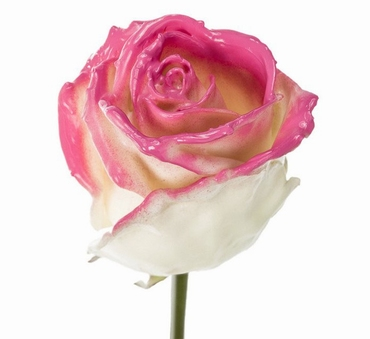 Bouquet of long white waxed Roses big flowers blush pink