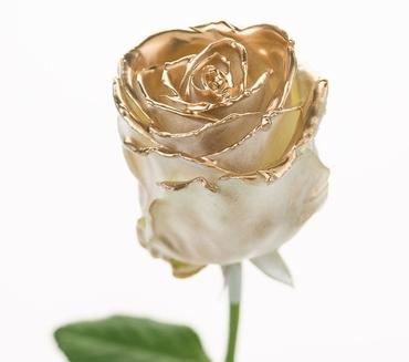 Boeket van grootbloemige wax Rozen wit met gouden blos