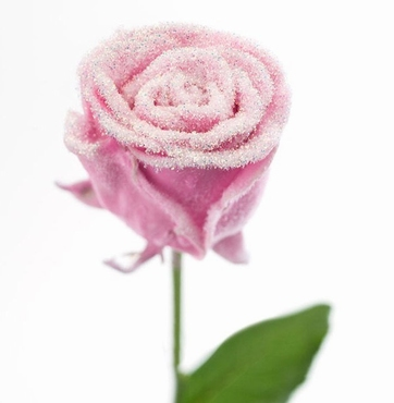 Bouquet of long pink waxed Roses big flowers snowy
