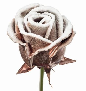 Roses à longue tiges à gros boutons ciré cuivré neigeux