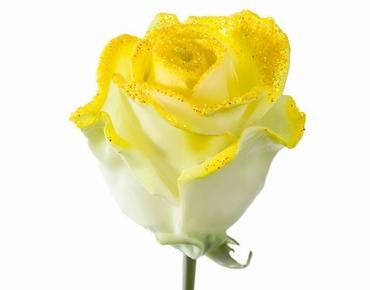 Roses longue tiges à gros boutons ciré et paillettes jaunes
