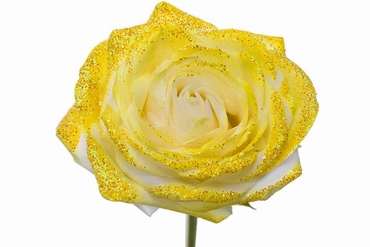 Bouquet of long white Roses big flowers and yellow sparkles