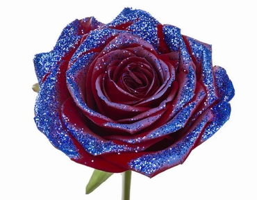 Bouquet of long red Roses big flowers and blue sparkles