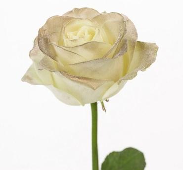 Roses à longue tiges à gros boutons blanc et teint dorée