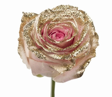 Bouquet of long pink Roses big flowers and golden sparkles