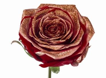 Roses longues tiges à gros boutons rouge paillettes cuivrée