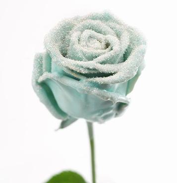 Roses à longue tiges à gros boutons ciré vintage neigeux
