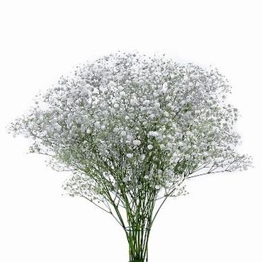 Gypsophila wit met zilverkleurige glitters