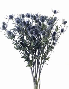 5 Eryngium blue short