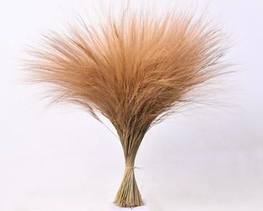 Dried  Barba de Bode 70 cm 150 grams