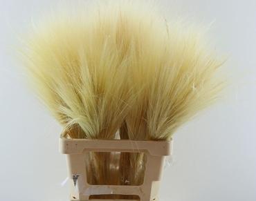 Barba de Bode gebleekt 80 cm 150 gram gedroogd