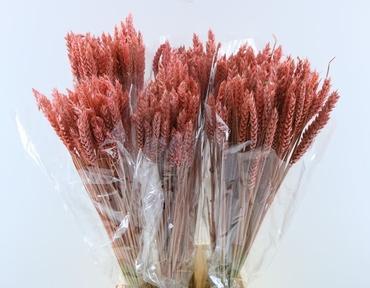 Gedroogde Tarwe roze