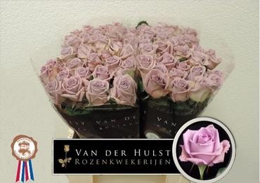 Bouquet lavender Roses big heads