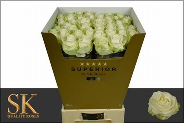 Bouquet cream white Roses with big heads 80 cm