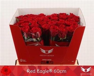 Bouquet of red Roses with big heads Red Eagle medium long