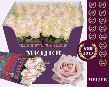 Bouquet light pink Avalanche Roses long big heads