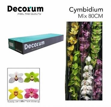 6 Tiges de Cymbidium à gros bouton avec 10-12 fleurons