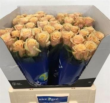 Bouquet peach Roses big heads