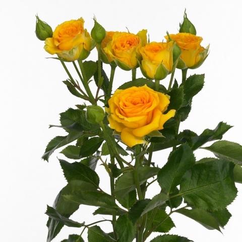 10 Trosrozen in diverse kleuren lengte 60 cm
