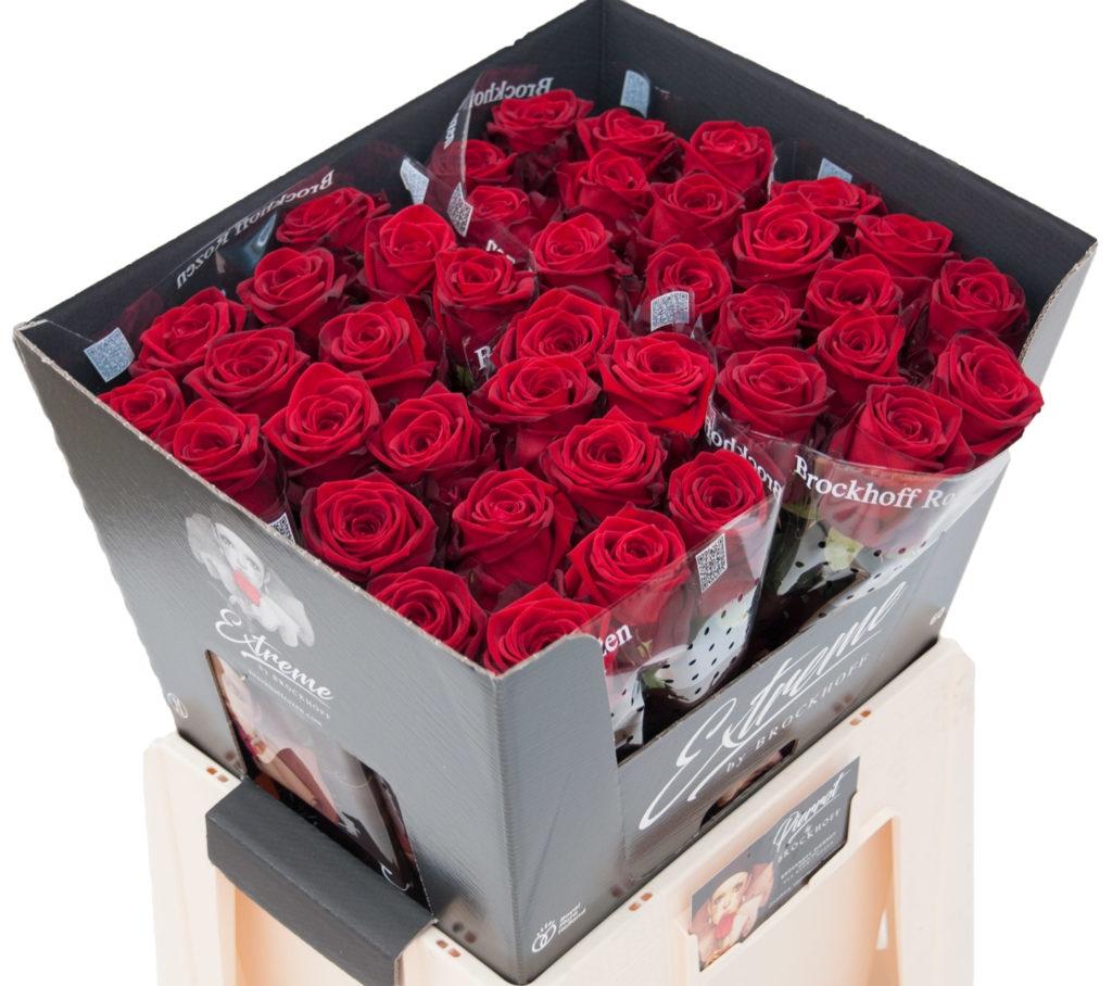 Bouquet de 100 Roses à gros boutons rouge courtes