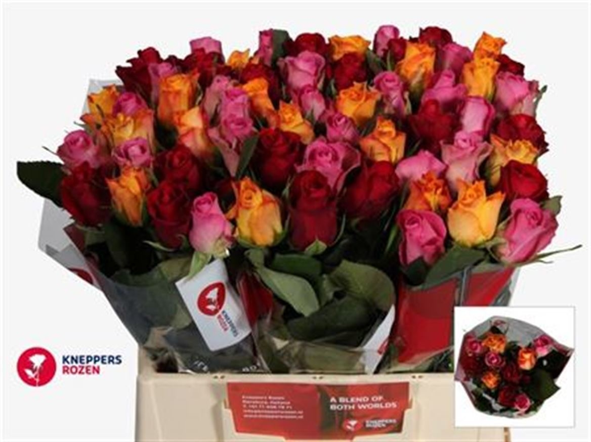 20 intermediate headed Roses mixed colors 50 cm