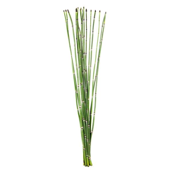 5 Prêle (Bambou Snake)