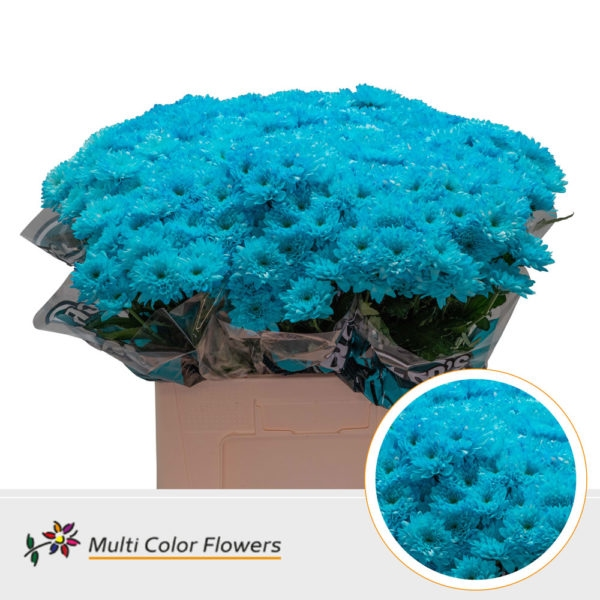 5 Chrysanthemums decorative painted