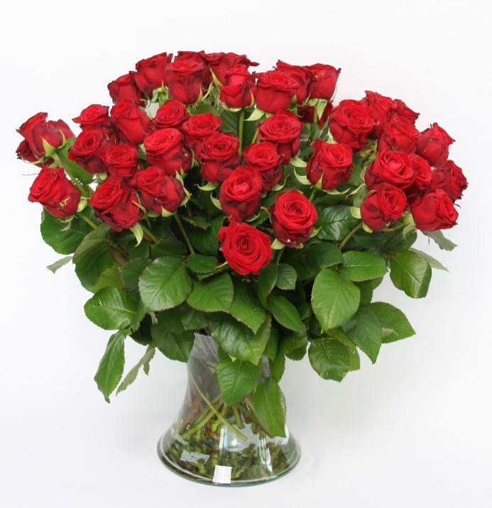 Bouquet of 50 short red Roses with big heads