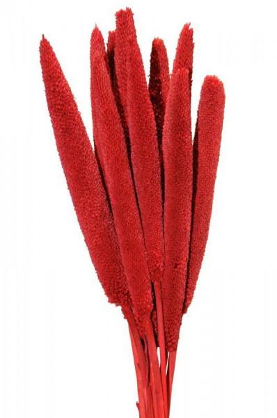 Babala rood