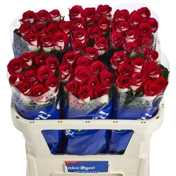 Bouquet bicolor white red Roses big heads