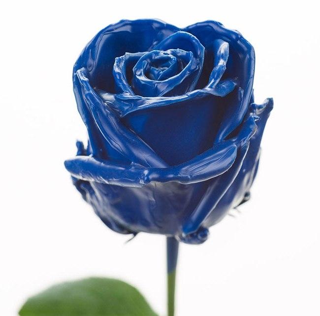 Roses à longue tiges à gros boutons ciré bleu foncé