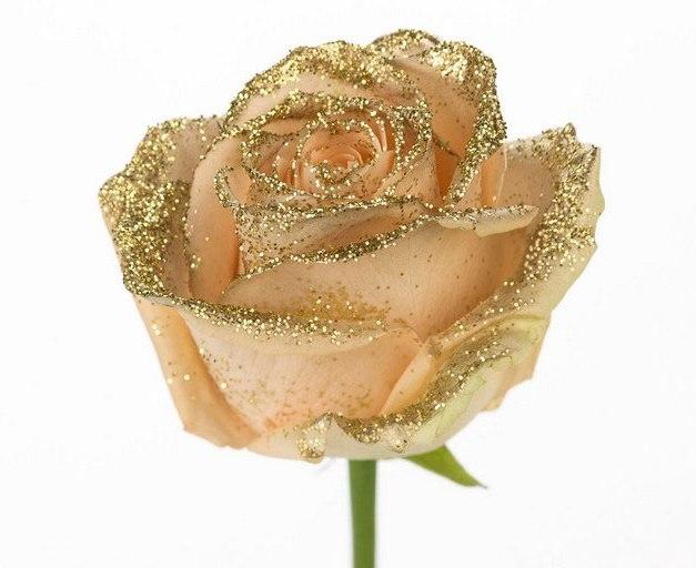Roses longues tiges à gros boutons peach et paillettes dorée